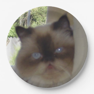 seal point himalayan 9 inch paper plate