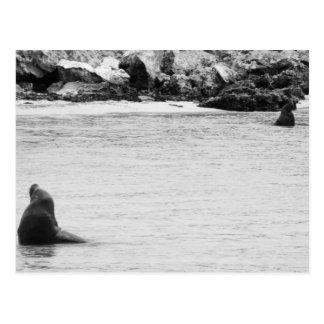 Seal Postcard