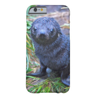 Seal Pup iPhone 6 Case