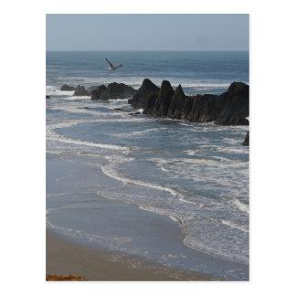 Seal Rocks, Oregon Postcard