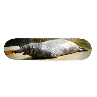 Seal | skateboard decks