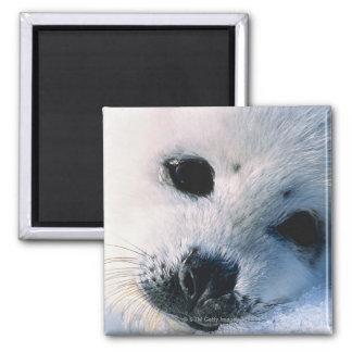 Seal Square Magnet