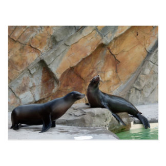 Seals chatting postcard