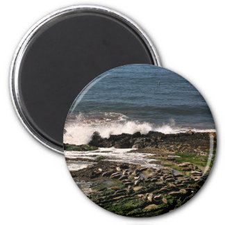 Seals 2 Inch Round Magnet