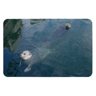 Seals Rectangular Photo Magnet