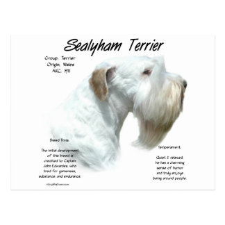 Sealyham Terrier History Design Postcard