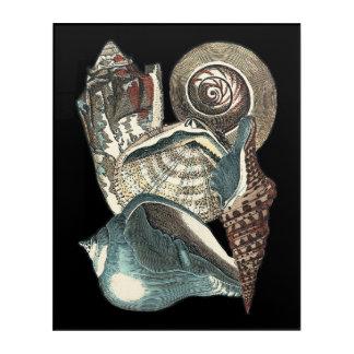 Seashell Anthology Acrylic Wall Art
