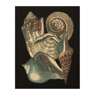 Seashell Anthology Wood Print