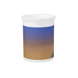 Seashell Drink Pitchers