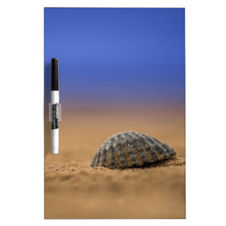 Seashell Dry-Erase Whiteboard
