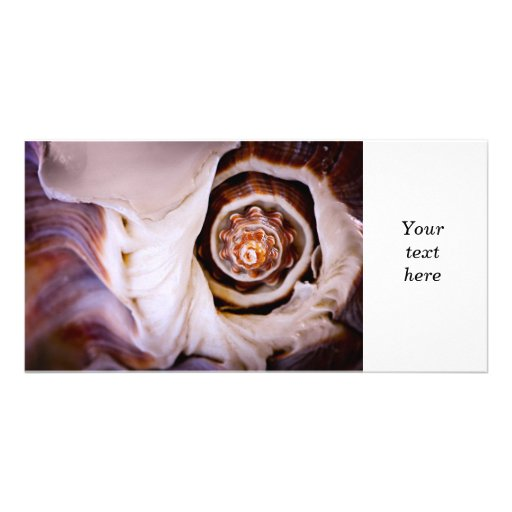 Seashell fragment photo card template