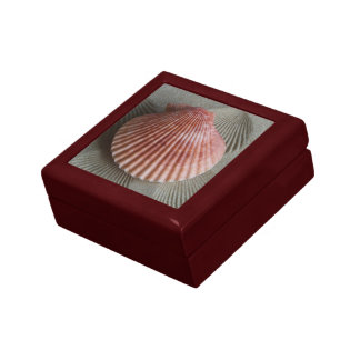 Seashell Keepsake Box