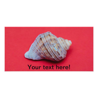 Seashell on a red background photo card