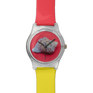 Seashell on a red background watch