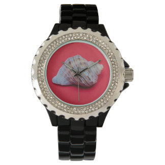 Seashell on a red background watches