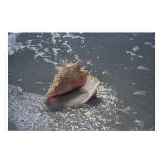 Seashell On Beach | Sanibel Island, Florida Poster