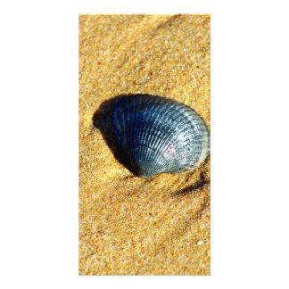 Seashell Photo Cards