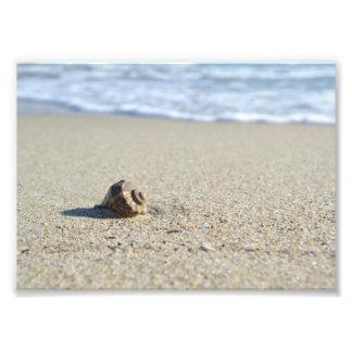 Seashell Photo Print