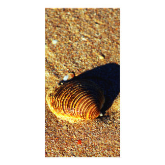 Seashell Picture Card