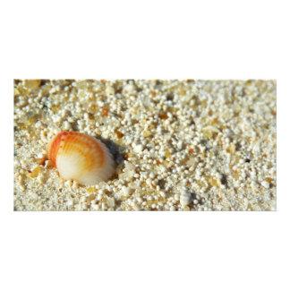 seashell custom photo card