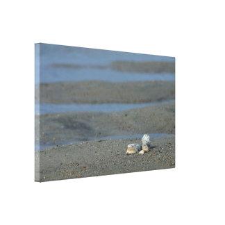 Seashell Pile Canvas Print