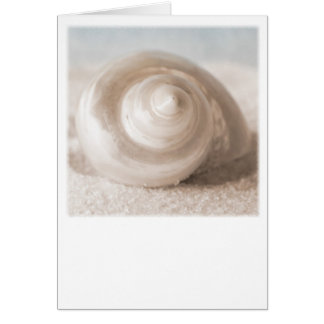 Seashell Sand Beach - Tropical Shells Template