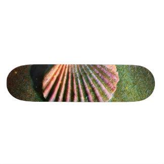 Seashell Skateboards