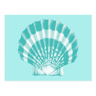 Seashell - soft aqua and white postcard