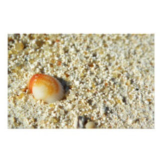 seashell stationery