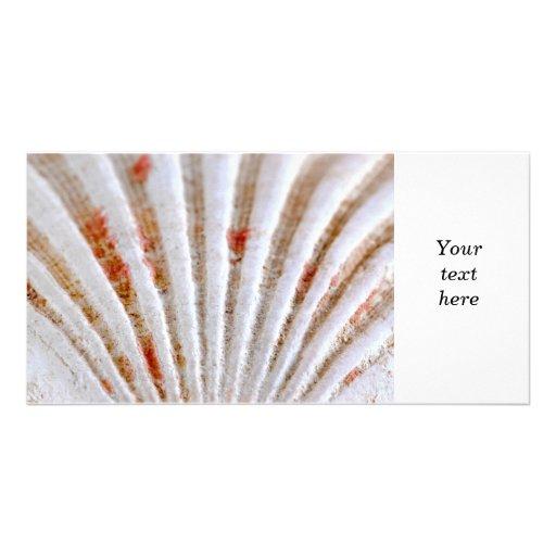Seashell surface photo greeting card