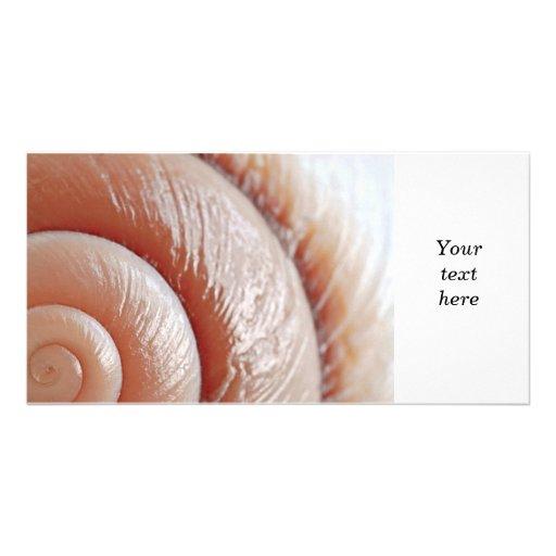 Seashell surface photo cards