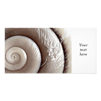 Seashell surface picture card