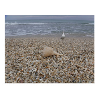 Seashells and Sea Gulls Postcard