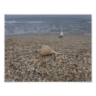 Seashells and Sea Gulls Poster