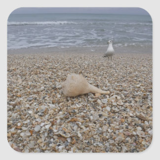Seashells and Sea Gulls Square Sticker
