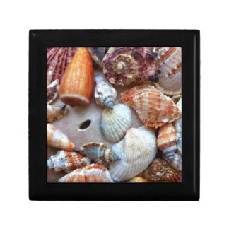 Seashells by the Seashore Gift Box