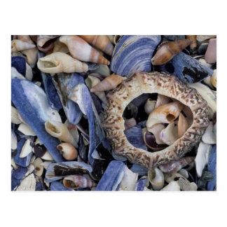 Seashells, Cape Town, Western Cape Postcard