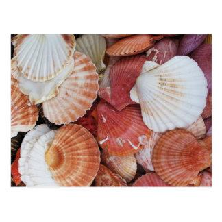 Seashells - close up sea shell photograph postcard