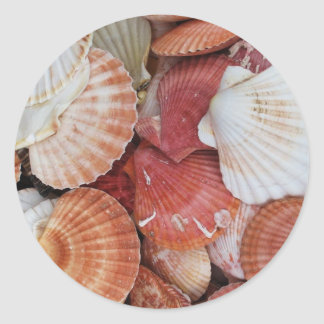 Seashells - close up sea shell photograph round sticker