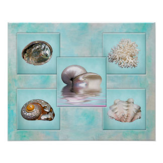 Seashells' Collage Poster - Aqua Background
