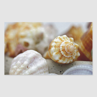 Seashells from the Seashore Sticker