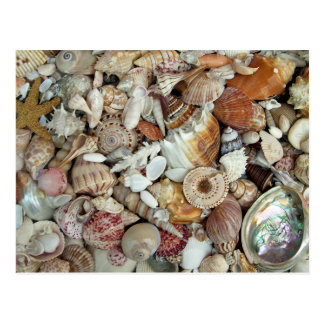 Seashells Galore Postcard