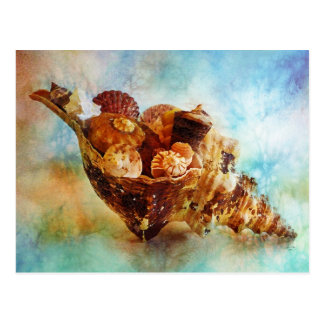 Seashells in a Horse Conch Watercolor Postcard