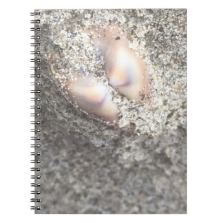 Seashells In The Sand Notebook