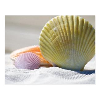 Seashells in White Sand Postcard