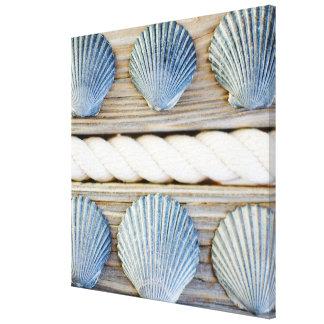 Seashells | New York City Canvas Print