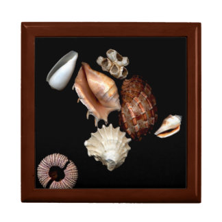 Seashells No. 15 Elegant Jewelry Box
