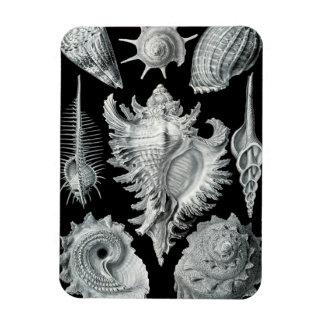 Seashells on Black #1 Rectangular Photo Magnet