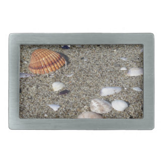 Seashells on sand. Summer beach background Belt Buckles