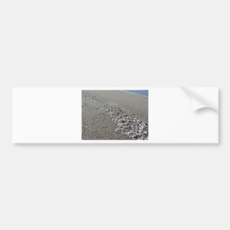 Seashells on sand. Summer beach background Bumper Sticker